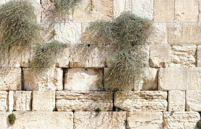 הייטק ירושלמי : על ייעול וניהול מידע בארגון